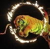 Цирки в Кропоткине