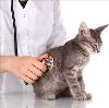 Ветеринарные клиники в Кропоткине